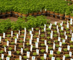 EcoFormsGrowers3